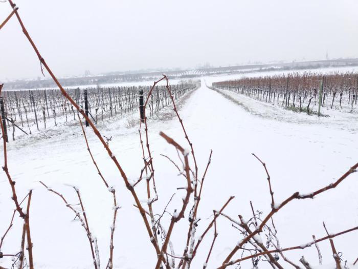 Hochstadt Weinberge Schnee.jpg